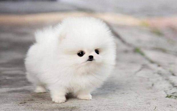 Vợ streamer giàu nhất Việt Nam mua cún cưng giá 23 triệu đồng - Ảnh 2.