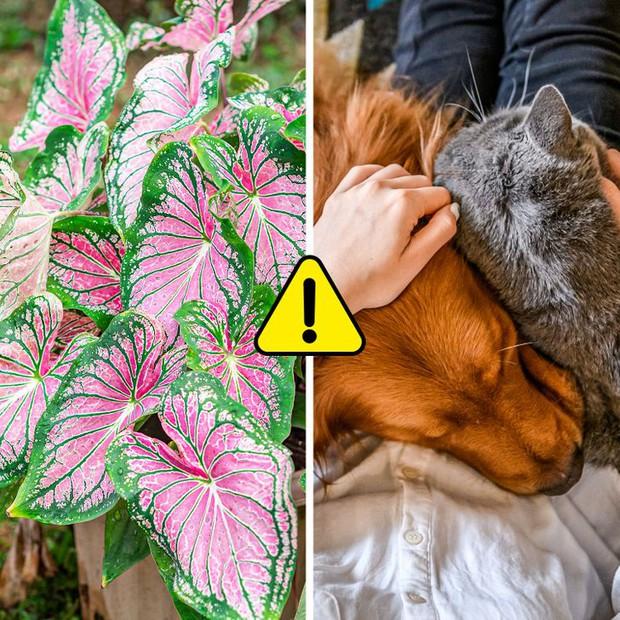 7 loại cây cảnh nhìn thì đẹp nhưng lại tiềm ẩn nguy hiểm, muốn trồng trong nhà phải cân nhắc kỹ - Ảnh 5.