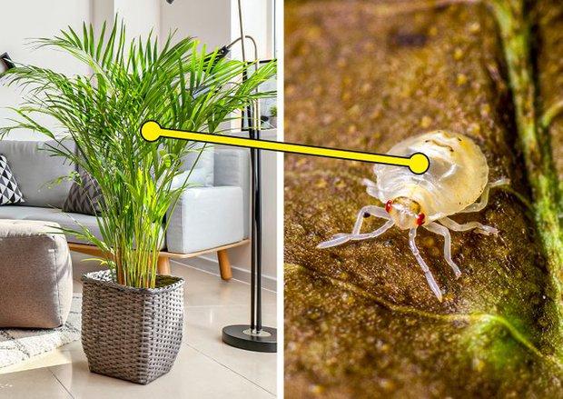 7 loại cây cảnh nhìn thì đẹp nhưng lại tiềm ẩn nguy hiểm, muốn trồng trong nhà phải cân nhắc kỹ - Ảnh 7.