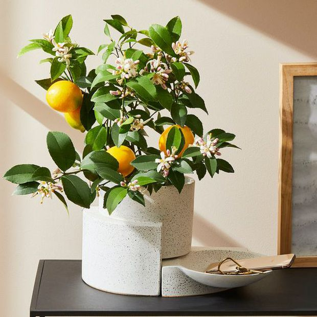 Phong thủy khuyên đặt 7 món đồ này trong nhà sẽ dồi dào sức khoẻ, cải thiện tinh thần cực tốt - Ảnh 1.