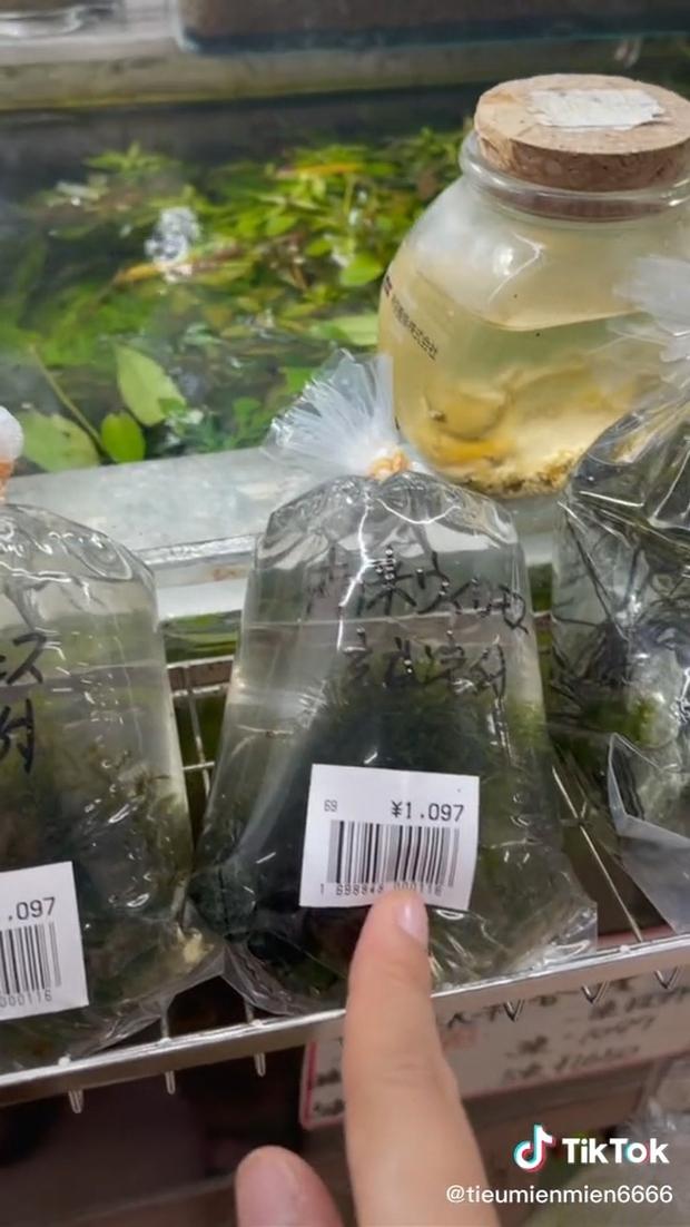 Những thứ ở Việt Nam chỉ cho gà ăn mà sang Nhật giá cực đắt khiến dân mạng xôn xao: Thế này thì nhà mình giàu to rồi! - Ảnh 3.