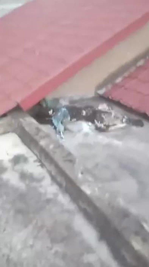 Kết quả xác minh ban đầu vụ bộ xương người trên mái nhà ở Bình Chánh, TP.HCM  - Ảnh 1.