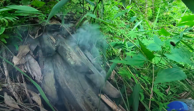 Vào rừng thấy thân cây mục nát đổ rạp dưới đất, anh chàng thử bóc ra thì phát hiện một thứ quý như vàng! - Ảnh 3.