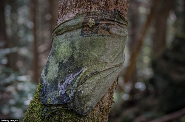 Một lần nói hết về Khu Rừng Tự Sát rùng rợn bậc nhất Nhật Bản: Ngập rác của người đã khuất, kì lạ đến nỗi GPS không hoạt động - Ảnh 8.