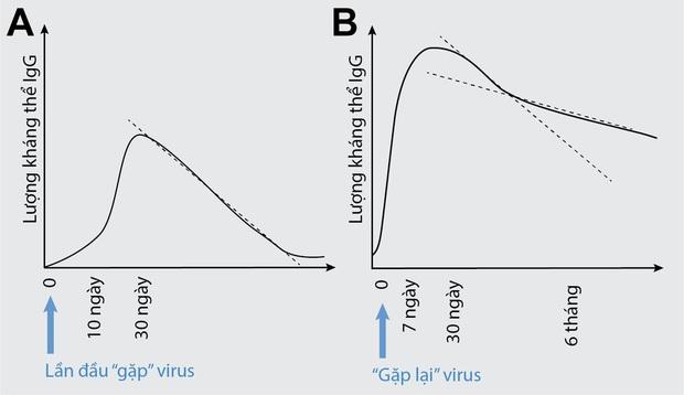 Nhà khoa học người Việt tại Mỹ: 2 lý do nên tiêm vaccine Sinopharm khi đến lượt - Ảnh 3.