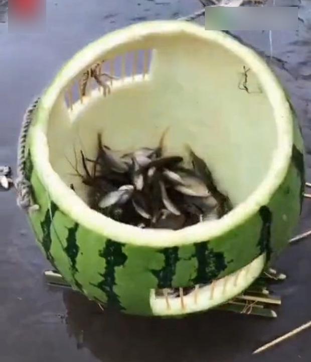 """Anh chàng tự chế lồng câu cá từ… dưa hấu bị làng xóm cười chê, đến khi kéo lên thì tất cả """"câm nín"""" - Ảnh 4."""