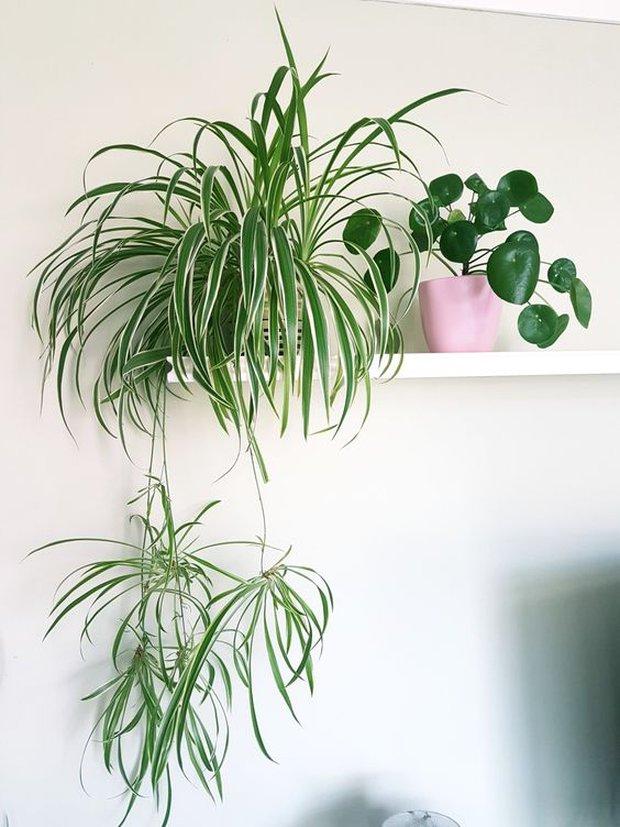 Trong nhà nên đặt 8 loại cây này để tinh thần thư thái, ngủ ngon, xua tan âu lo muộn phiền - Ảnh 1.