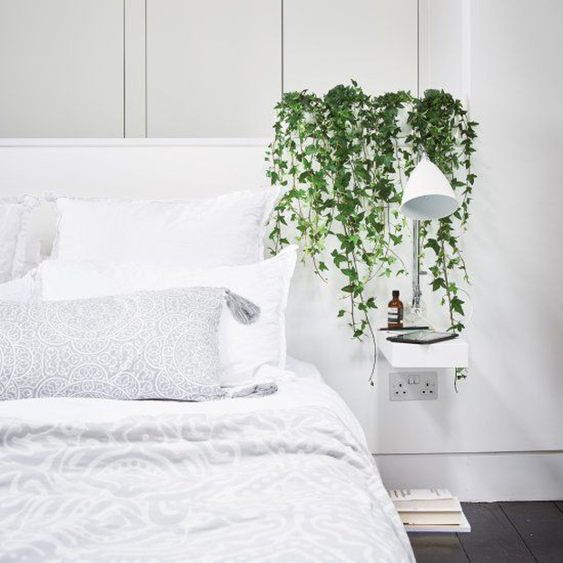Trong nhà nên đặt 8 loại cây này để tinh thần thư thái, ngủ ngon, xua tan âu lo muộn phiền - Ảnh 3.