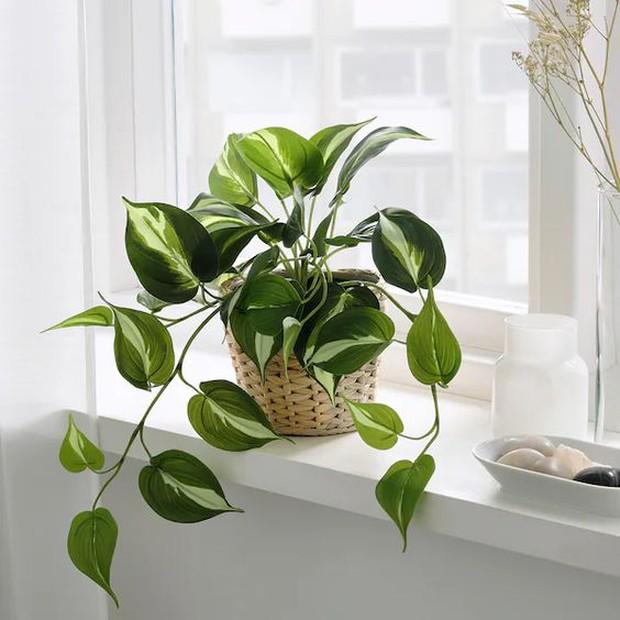 Trong nhà nên đặt 8 loại cây này để tinh thần thư thái, ngủ ngon, xua tan âu lo muộn phiền - Ảnh 11.