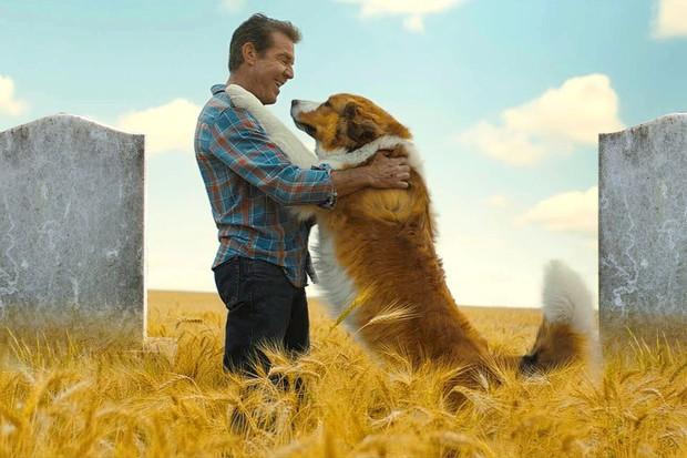 Netizen Việt khóc hết nước mắt vì bộ phim siêu cảm động về cuộc đời chú chó chuyển kiếp: Chỉ muốn chạy vào màn hình ôm mà khóc! - Ảnh 6.