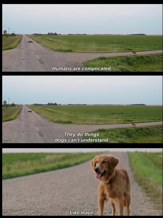 Netizen Việt khóc hết nước mắt vì bộ phim siêu cảm động về cuộc đời chú chó chuyển kiếp: Chỉ muốn chạy vào màn hình ôm mà khóc! - Ảnh 3.