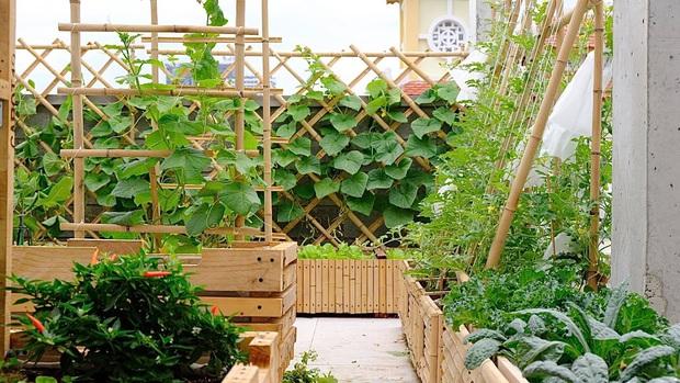Vườn rau trên sân thượng quá đỉnh khiến dân tình nức nở ước ao, đủ loại rau củ đề huề chẳng thua gì siêu thị - Ảnh 2.