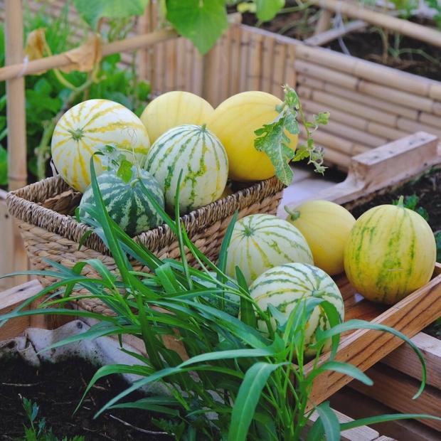 Vườn rau trên sân thượng quá đỉnh khiến dân tình nức nở ước ao, đủ loại rau củ đề huề chẳng thua gì siêu thị - Ảnh 5.