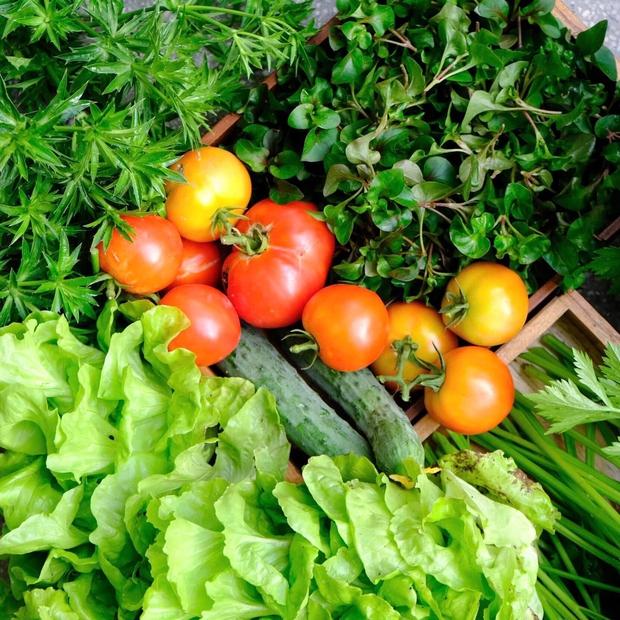 Vườn rau trên sân thượng quá đỉnh khiến dân tình nức nở ước ao, đủ loại rau củ đề huề chẳng thua gì siêu thị - Ảnh 10.