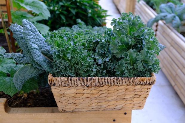 Vườn rau trên sân thượng quá đỉnh khiến dân tình nức nở ước ao, đủ loại rau củ đề huề chẳng thua gì siêu thị - Ảnh 9.