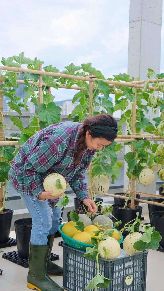 Vườn rau trên sân thượng quá đỉnh khiến dân tình nức nở ước ao, đủ loại rau củ đề huề chẳng thua gì siêu thị - Ảnh 11.