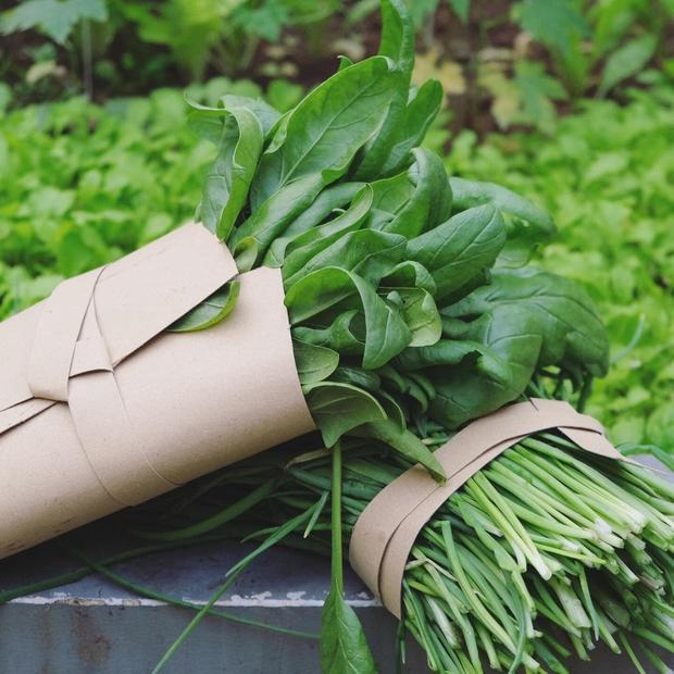 Vườn rau trên sân thượng quá đỉnh khiến dân tình nức nở ước ao, đủ loại rau củ đề huề chẳng thua gì siêu thị - Ảnh 8.