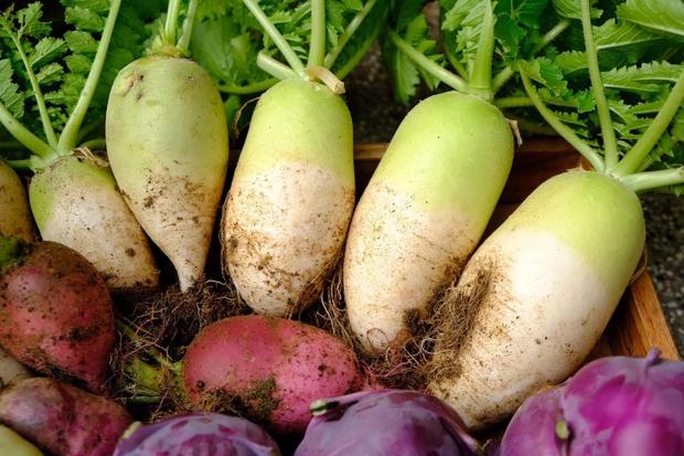 Vườn rau trên sân thượng quá đỉnh khiến dân tình nức nở ước ao, đủ loại rau củ đề huề chẳng thua gì siêu thị - Ảnh 6.