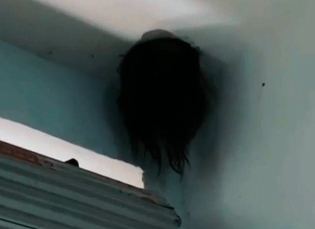 """Sáng tỉnh dậy thấy cái đầu đầy tóc thò ra ở góc trần nhà, cặp vợ chồng nhìn kỹ """"hiện vật"""" còn hốt hoảng hơn phải gọi vội cảnh sát - Ảnh 1."""