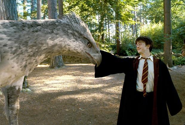 Loài vật thần bí nổi tiếng bậc nhất Harry Potter hóa ra cũng có thật ở hậu trường, bây giờ khán giả nếu thích vẫn có thể đến thăm! - Ảnh 1.