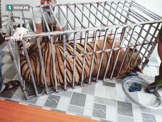 Video: Cận cảnh chuồng trại nuôi nhốt 17 con hổ lớn vừa bị công an triệt phá - Ảnh 9.