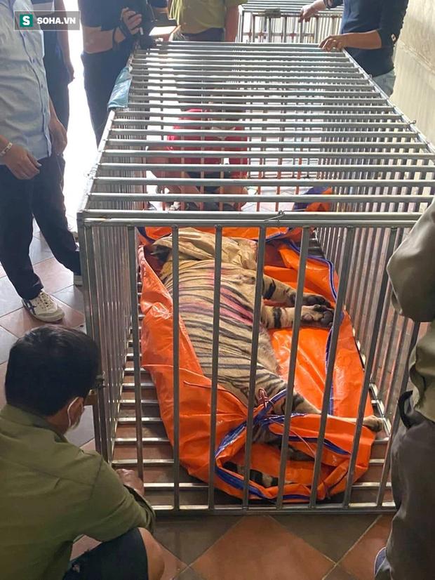 Video: Cận cảnh chuồng trại nuôi nhốt 17 con hổ lớn vừa bị công an triệt phá - Ảnh 10.