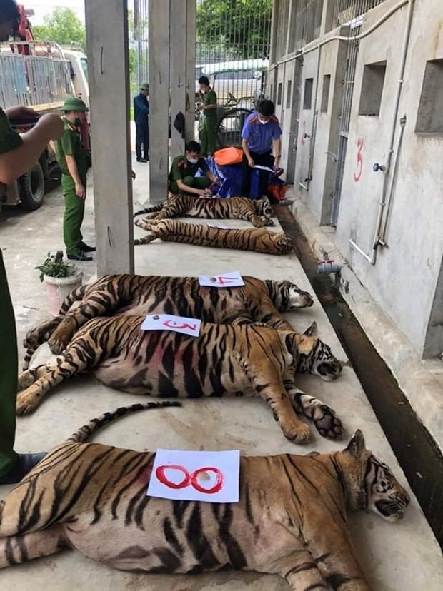 Nghệ An: 8 trong số 17 cá thể hổ đã chết sau khi thu giữ - Ảnh 2.