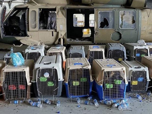 American Humane: Những con chó phục vụ bị quân đội Mỹ bỏ lại ở Afghanistan sẽ phải chịu số phận tệ hơn cái chết - Ảnh 2.