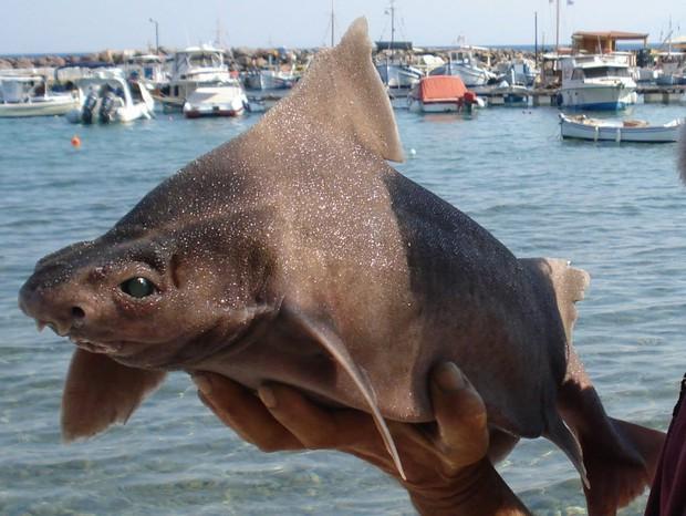 Đoàn thủy thủ tóm được cá mập mặt lợn siêu hiếm đang bơi lêu hêu gần bến cảng, chụp ảnh khoe lên mạng mà suýt bị đi tù - Ảnh 3.