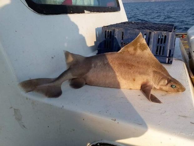 Đoàn thủy thủ tóm được cá mập mặt lợn siêu hiếm đang bơi lêu hêu gần bến cảng, chụp ảnh khoe lên mạng mà suýt bị đi tù - Ảnh 6.
