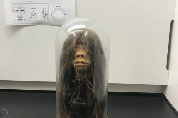 Chiếc đầu rùng rợn được dùng làm đạo cụ trong hàng loạt bộ phim hoá ra là… đầu người thật và phát hiện đầy bất ngờ của giới khoa học - Ảnh 2.