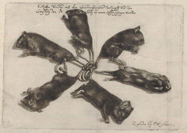 Bắt được 5 con chuột nhắt dính đuôi vào nhau, người đàn ông tá hỏa khi mục kích hiện tượng xúi quẩy bậc nhất từ thời Trung cổ - Ảnh 5.
