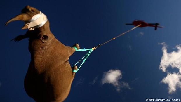Ig Nobel 2021: Con tê giác lộn ngược này đã giành chiến thắng tại giải thưởng khoa học hề hước nhất năm nay - Ảnh 1.