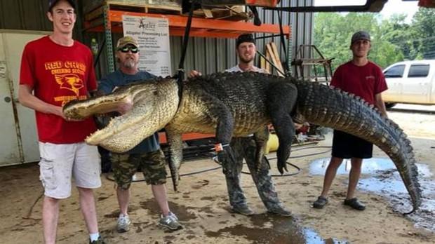 Bắt được cá sấu khổng lồ, người đàn ông sướng rơn khi phát hiện kho báu vô giá trong bụng con vật - Ảnh 1.