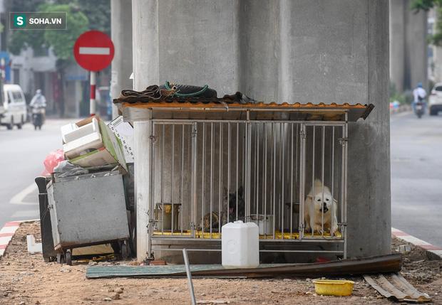Đường sắt Cát Linh-Hà Đông 18.000 tỷ đồng chưa hẹn ngày khai thác: Người dân tận dụng không gian để nuôi chó, trồng rau - Ảnh 3.