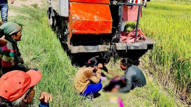 Chạy sau máy cắt lúa để bắt chuột đồng, bé trai 9 tuổi bị cán tử vong - Ảnh 1.