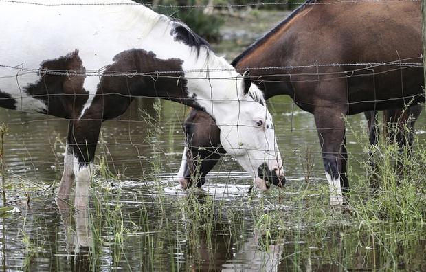 Mỹ: Bão Nicholas tấn công vùng duyên hải vịnh Mexico, mưa như trút nước gây ngập lụt, mất điện - Ảnh 11.
