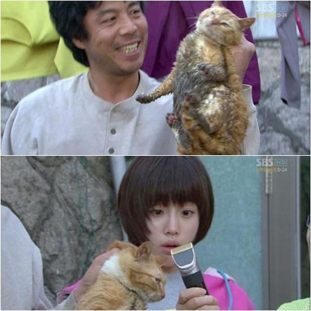 4 phim Hàn bị chỉ trích vì ngược đãi động vật: Căng nhất là màn chọi chó ở bom tấn của Lee Jun Ki - Ảnh 1.