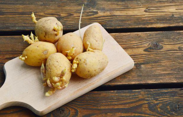 4 loại rau củ quen thuộc khi mọc mầm không những làm giảm giá trị dinh dưỡng mà thậm chí còn sinh ra độc tố, gây hại cho sức khỏe - Ảnh 1.