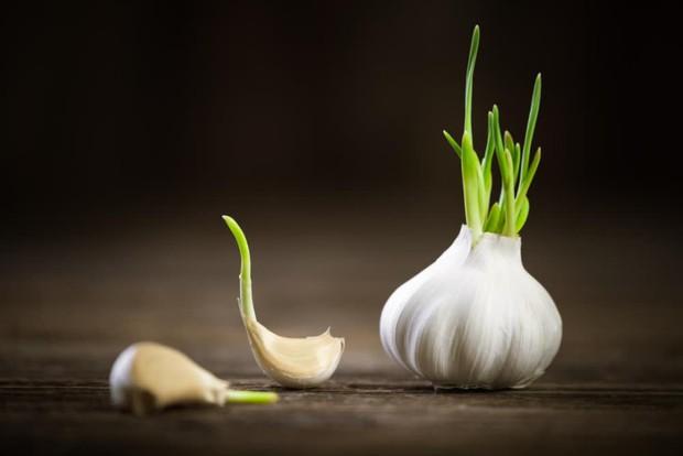 4 loại rau củ quen thuộc khi mọc mầm không những làm giảm giá trị dinh dưỡng mà thậm chí còn sinh ra độc tố, gây hại cho sức khỏe - Ảnh 2.