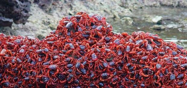 Hòn đảo kỳ lạ chi chít loài sinh vật màu đỏ bu kín, xem ảnh sởn gai ốc nhưng khách nước ngoài vẫn ham tới khám phá - Ảnh 2.