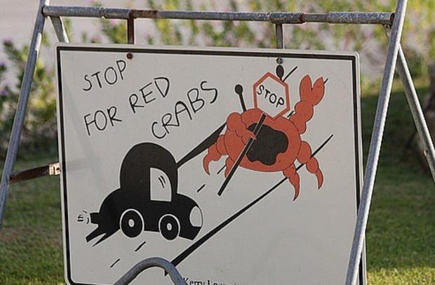 Hòn đảo kỳ lạ chi chít loài sinh vật màu đỏ bu kín, xem ảnh sởn gai ốc nhưng khách nước ngoài vẫn ham tới khám phá - Ảnh 4.
