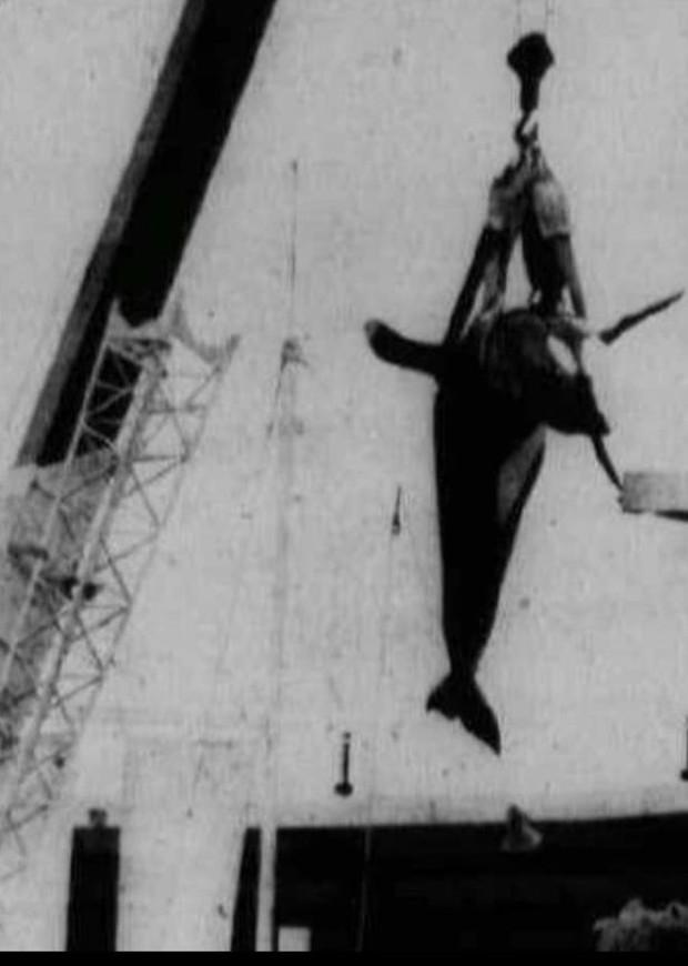 Bị bắt nhốt từ năm 3 tuổi, cá voi làm trò vui cho con người quay sang tấn công huấn luyện viên và kết thúc cuộc đời trong bi thảm - Ảnh 5.