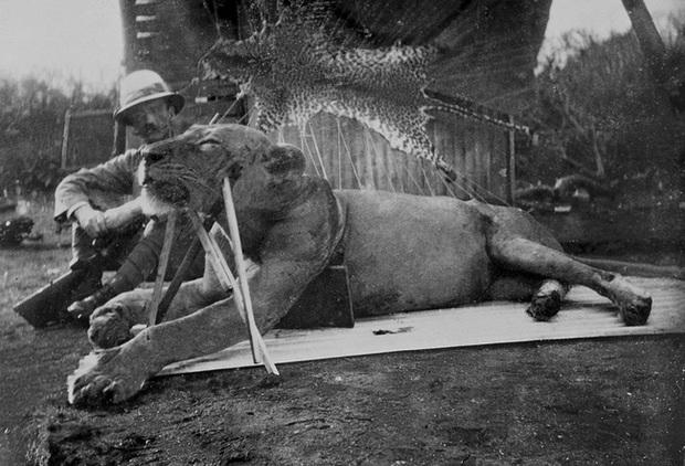Bí ẩn quái thú ăn thịt người cuồng sát 135 sinh mạng, di ảnh cùng lời giải thích sau hơn 100 năm khiến hậu thế run sợ - Ảnh 4.