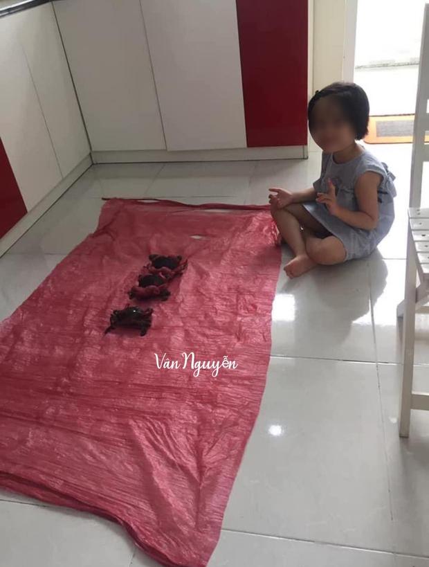Cô gái mua cua được người bán khuyến mãi một thứ nhìn vào mà phát hãi, đúng là mặt hàng lừa tình nhất Việt Nam - Ảnh 3.