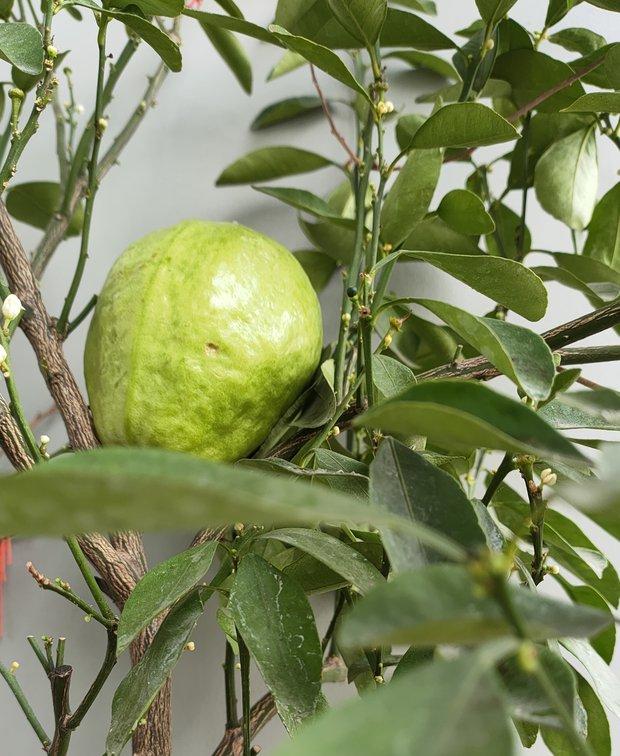 Khoe vườn cây trái trĩu quả trồng được trên chung cư, cô gái khiến dân mạng cười sang chấn tâm lý vì một lý do - Ảnh 6.