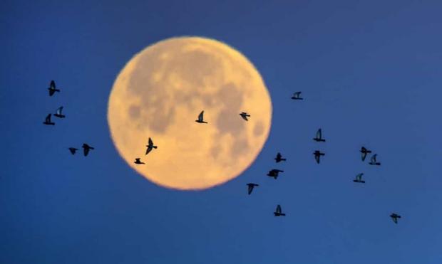 Những sự thật bất ngờ về Mặt Trăng - Ảnh 4.