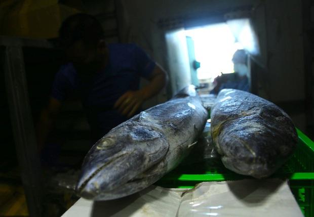 Hàng trăm tấn hải sản chất đầy kho đông lạnh không bán được vì dịch Covid-19 - Ảnh 9.