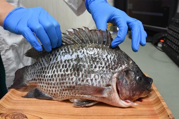 Người phụ nữ bị vi khuẩn ăn cụt bàn tay chỉ sau vài giờ từ vết xước do vảy cá gây ra, bác sĩ đưa ra 6 lời khuyên để ngăn ngừa bị nhiễm bệnh - Ảnh 3.