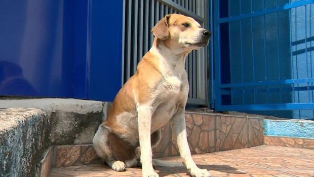 Thấy con chó lảng vảng ở cửa phòng khám, bác sĩ thú ý sinh nghi đưa vào khám thử rồi sốc với những gì diễn ra tiếp theo - Ảnh 8.